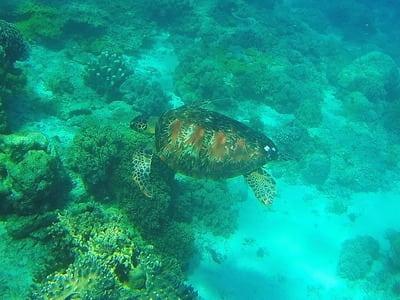 ネグロス島 アポ島の海