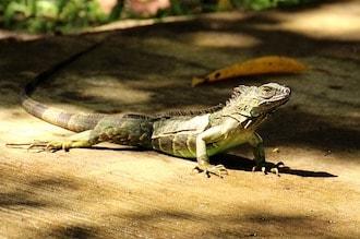 コスタリカ 国立公園