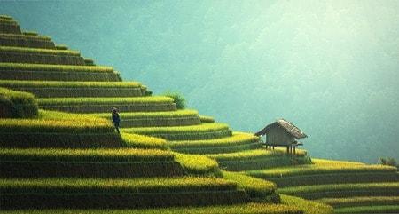 インドネシア バリ島 ウブドの段々畑