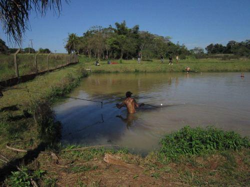ブラジル 養殖魚