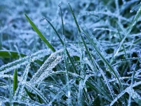 タイで霜が降る ドイ・インタノン国立公園