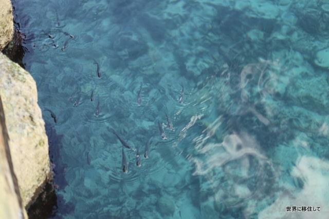 マルタ ゴゾ島 マルサ―フォン 海 透明度