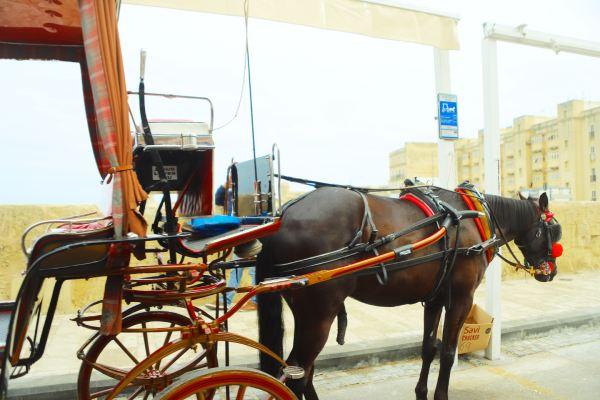 ヴァレッタ 場所に乗ってヴァレッタ市内を回るツアー